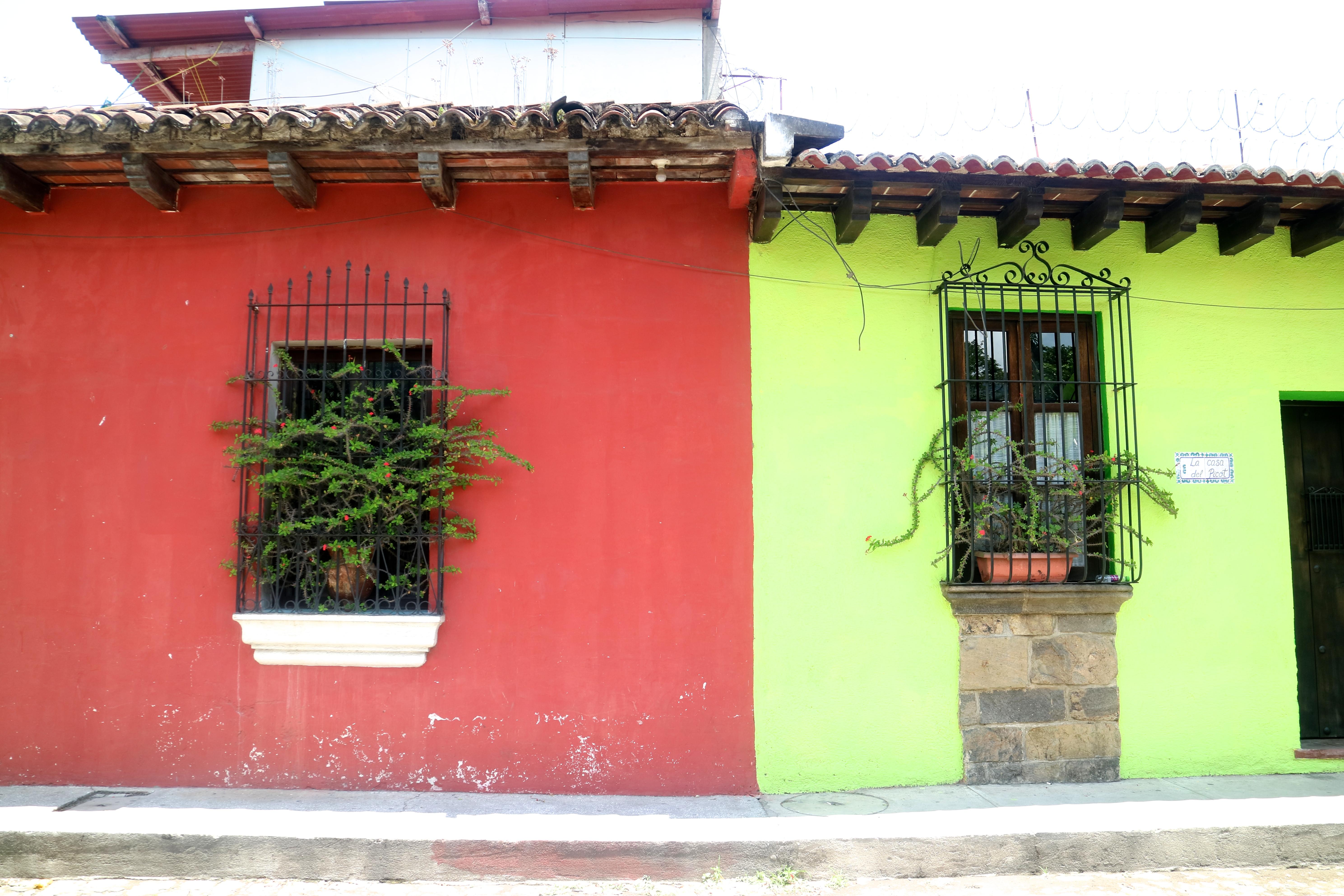 the lazy trotter, antigua, guatemala