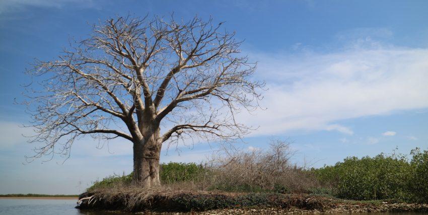 Viaggio in Senegal: 10 cose da sapere prima di partire