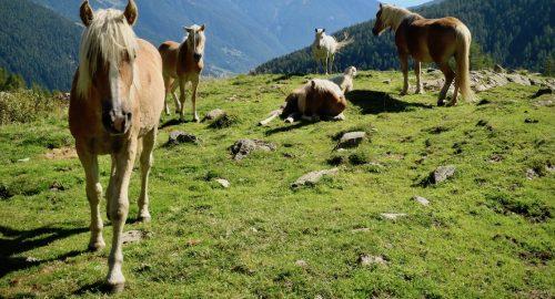 Cosa vedere in Trentino: Val di Sole, Val di Rabbi, natura e tanto cibo