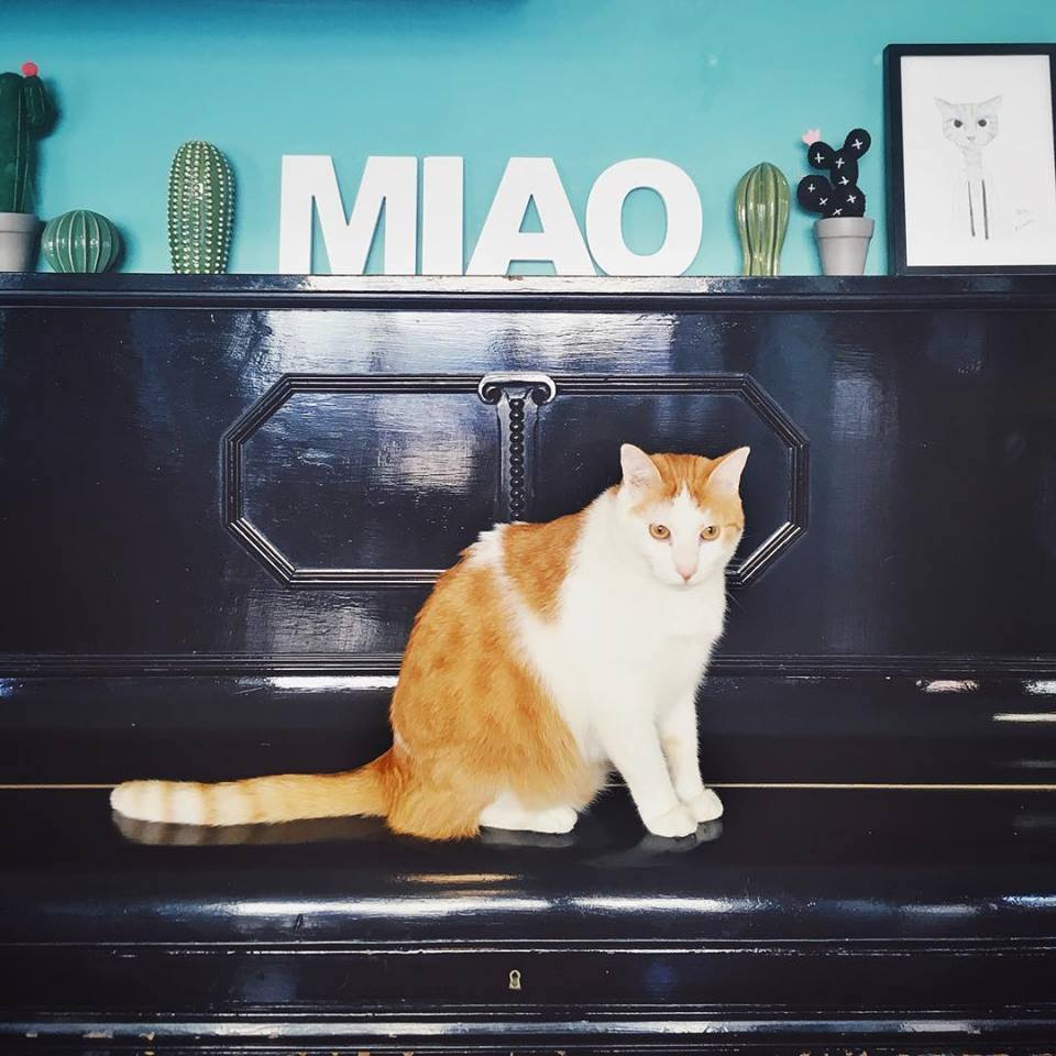 cat cafe, bar dei gatti, bar con gatti a milano, crazy cat cafe