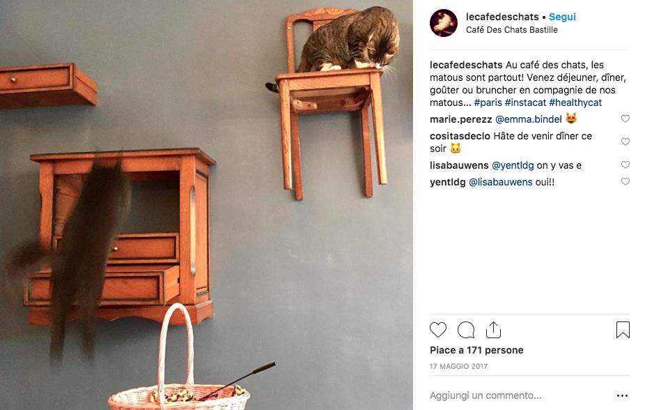 cat cafe, bar dei gatti, bar con gatti