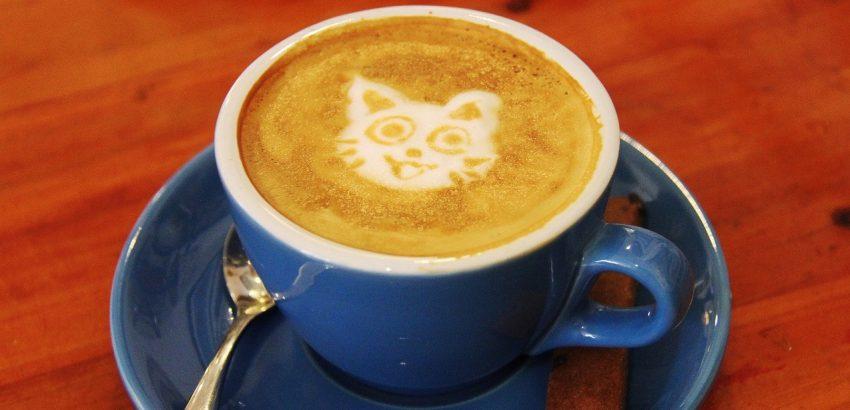 Cat cafe: tutti i più bei bar dei gatti in Italia e nel mondo