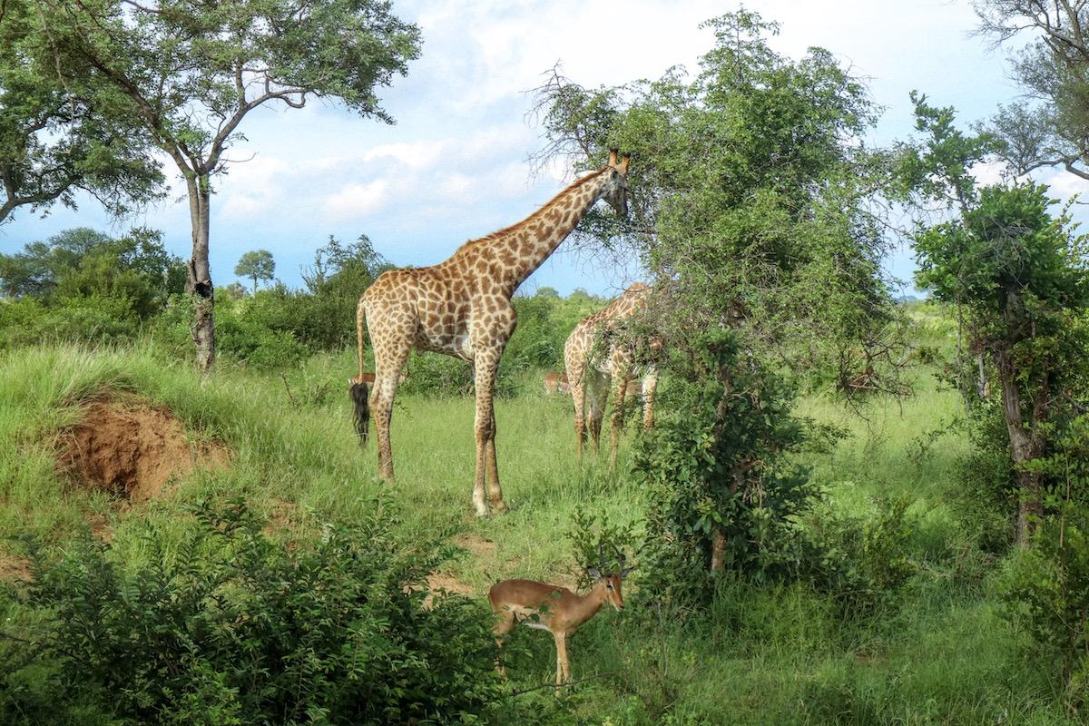 kruger-park-viaggio-sudafrica-kruger-parco-nazionale-kruger
