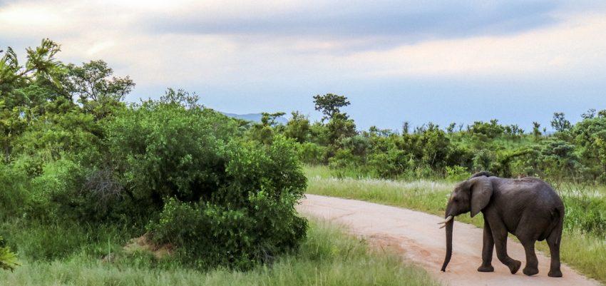 Kruger Park: consigli e informazioni utili per il tuo viaggio in Sudafrica