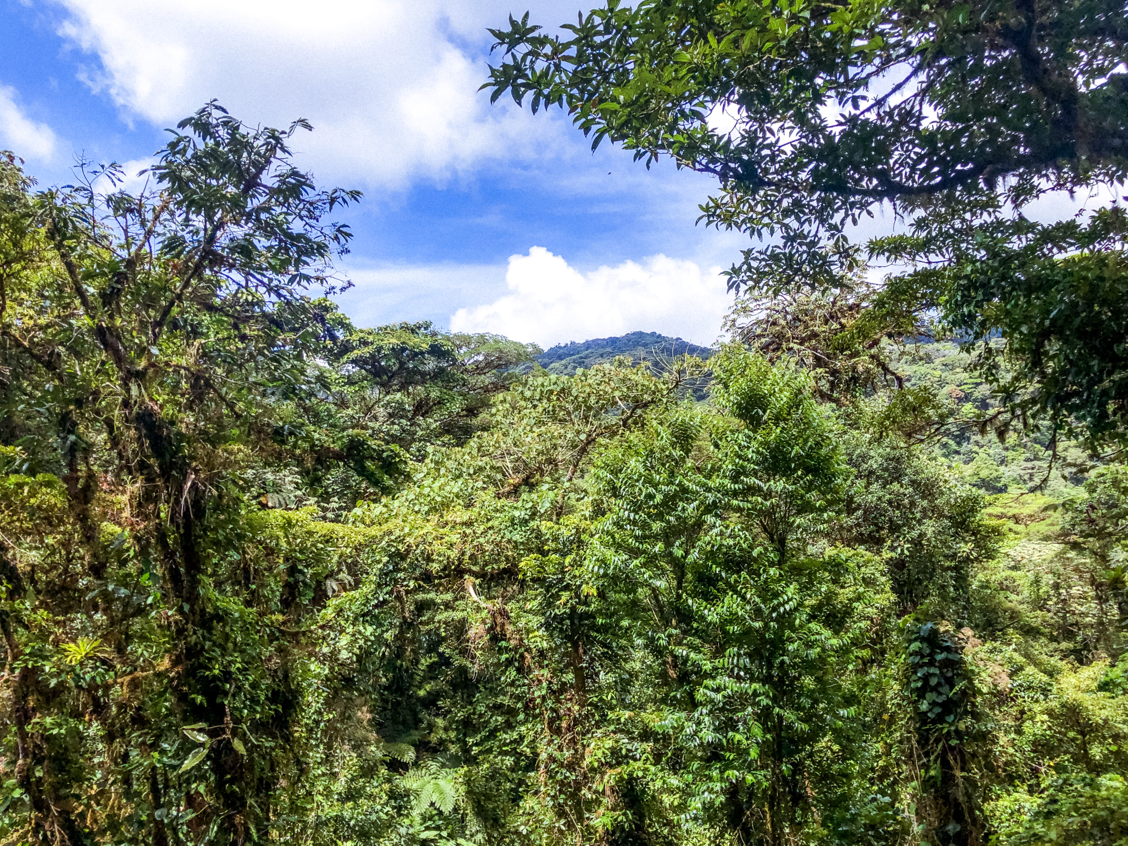 viaggio-in-costa-rica-cosa-vedere-in-costa-rica-monteverde