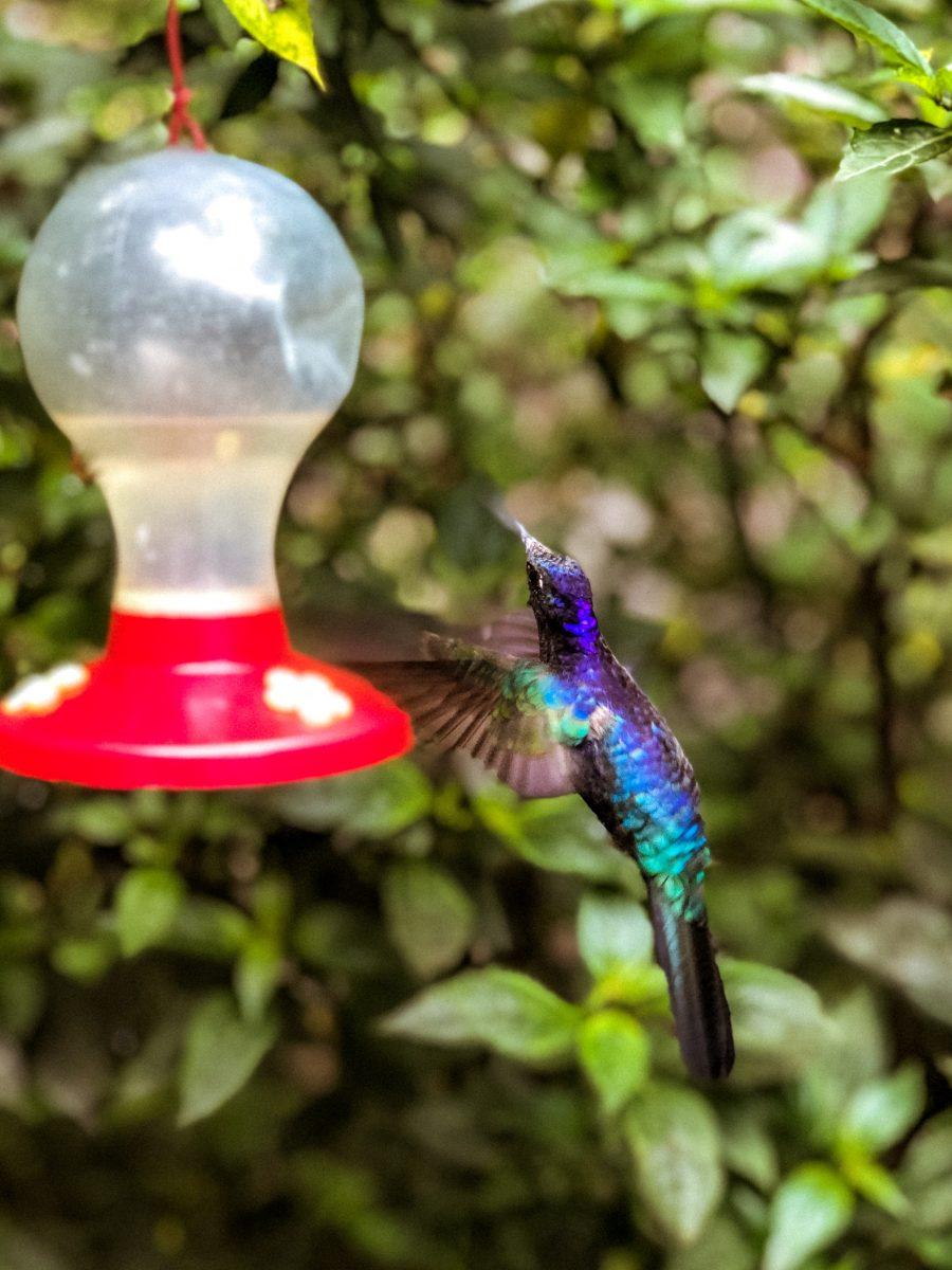 viaggio-in-costa-rica-cosa-vedere-in-costa-rica-colibrì