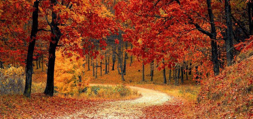 Viaggi a novembre: 8 bellissime mete autunnali da visitare assolutamente