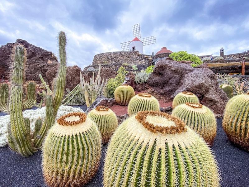 jardin-cactus-lanzarote-cosa-vedere