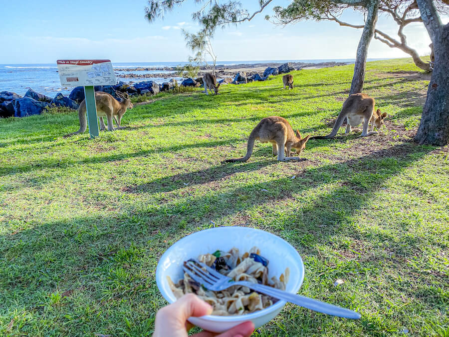 viaggiare_australia_canguri