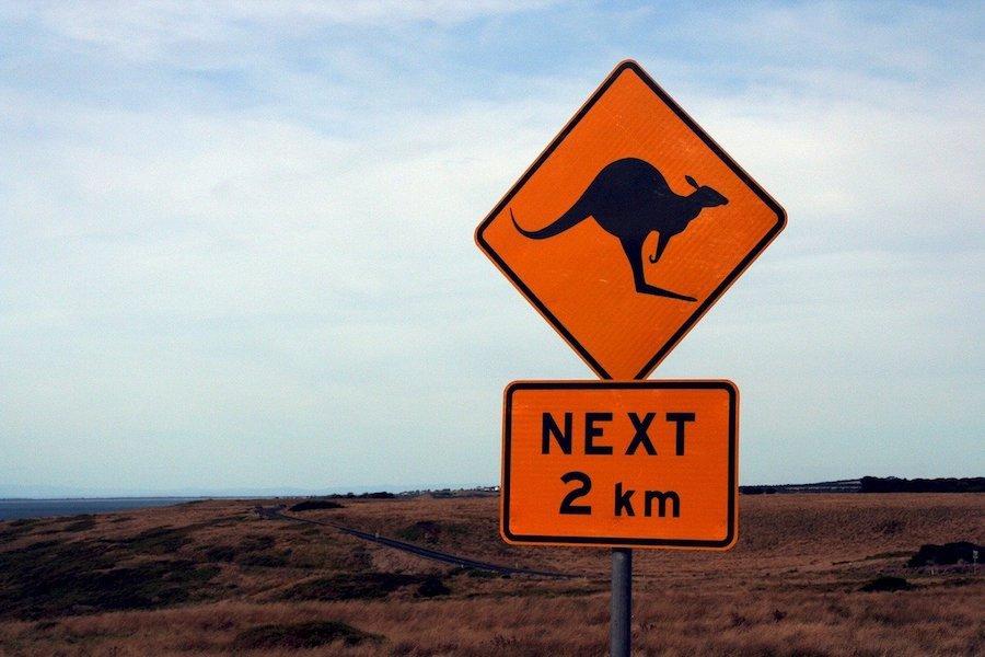 canguro_australia_guidare_viaggio