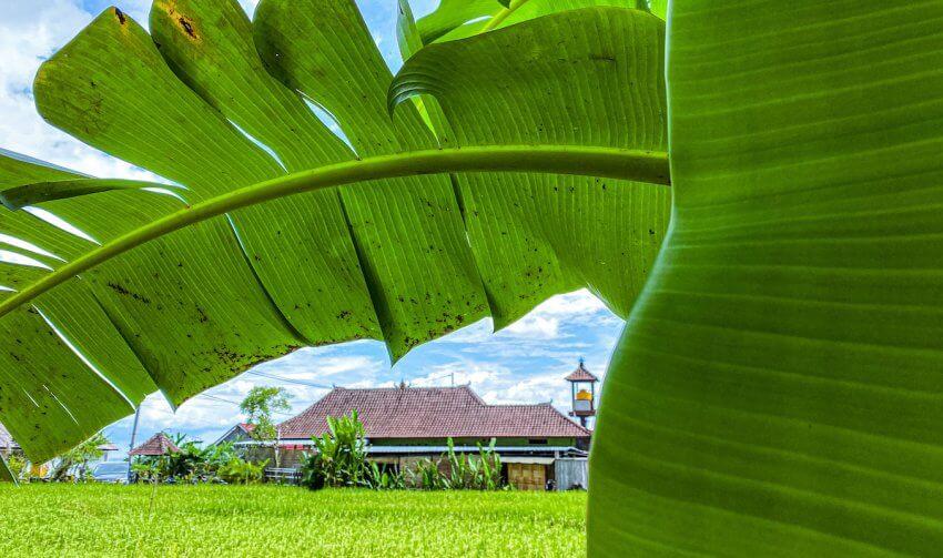 Viaggiare a Bali: 10 idee diverse dal solito per le tue vacanze
