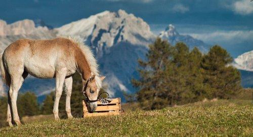 Le attività da svolgere all'Alpe di Siusi in estate e durante l'inverno