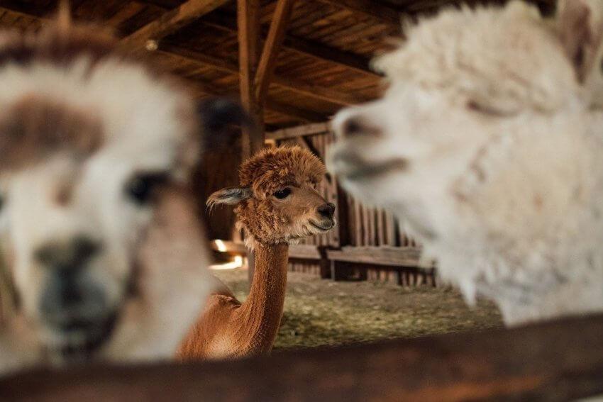 I migliori agriturismi in Lombardia: 10 indirizzi da salvare